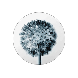 Institute of Philosophy Alexandru Dragomir